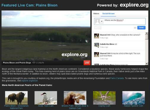 Screenshot of Live Webcam Feed