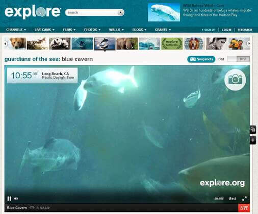 Screenshot of Underwater Cam