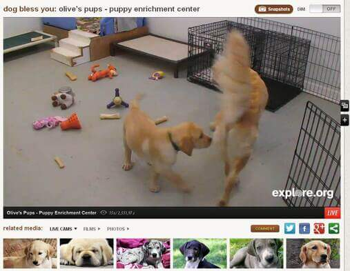 Screenshot of Puppy Cam