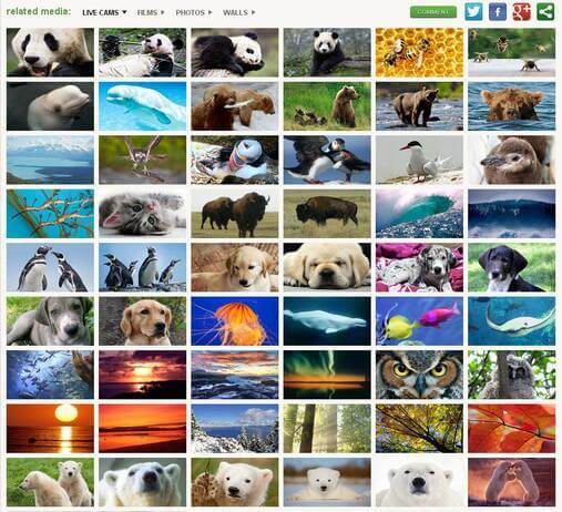 Screenshot of Webcam Feed Selection