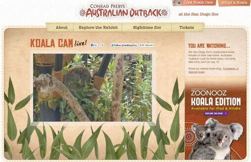 Screenshot of Koala Bear Live Webcam