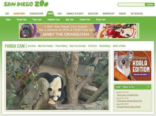 Screenshot of Panda Cam
