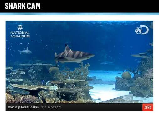 Screenshot of Shark Cam