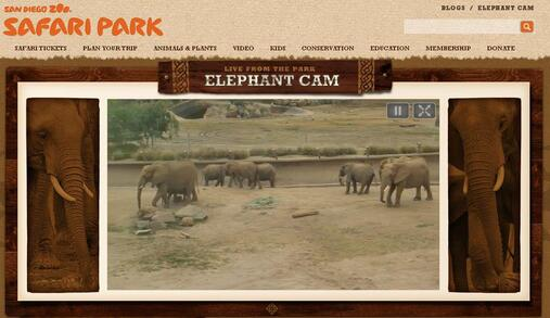 Screenshot of Elephant Webcam